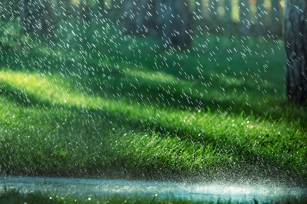 Krople deszczu spadają na asfalt i zieloną trawę.