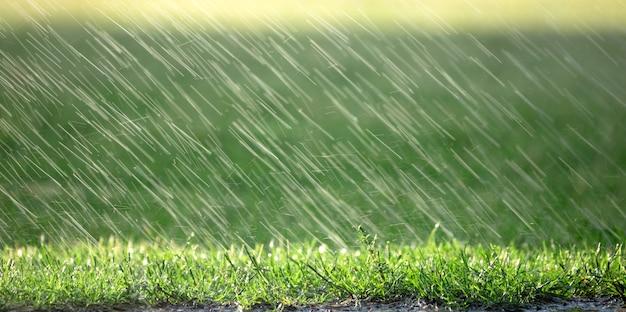Krople deszczu spadające na zieloną trawę, naturalne tło, prognoza pogody
