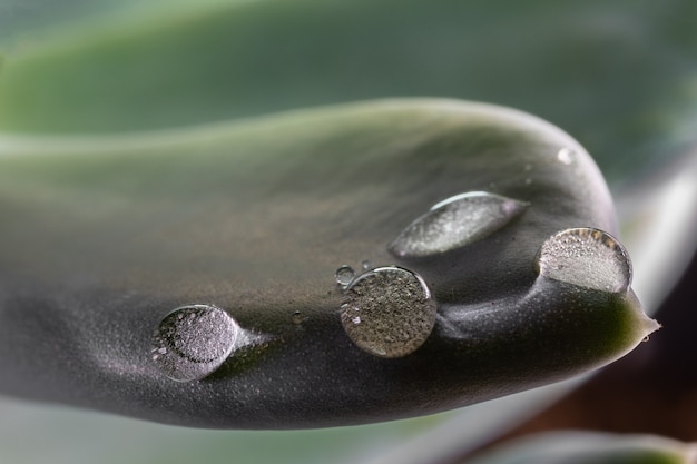 Krople na liściu rośliny.