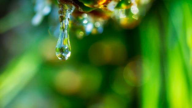 Krople rosy na pięknej zielonej trawie, tło z bliska