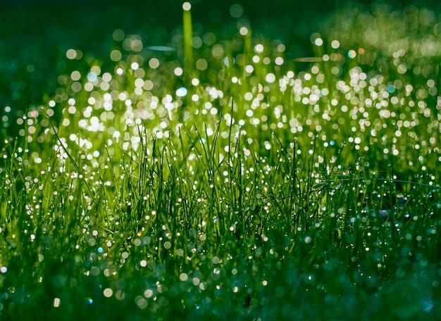 Krople rosy na trawie bez ostrości