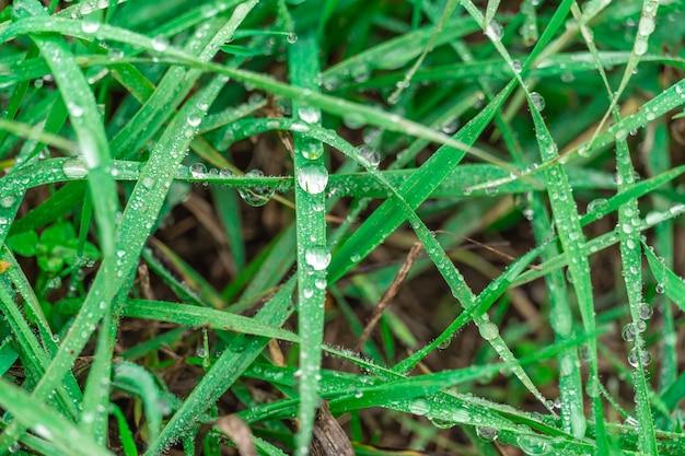 Krople rosy na zbliżenie soczysta zielona trawa. krople deszczu na łące, scena natury. ekologia, dzień ziemi, koncepcja ochrony czystej wody