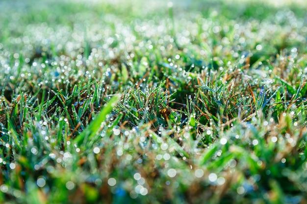 Krople rosy na zielonej trawie
