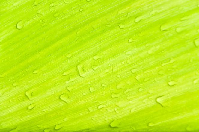 krople rosy na zielonych liściach, tekstury zielonych liści na tle