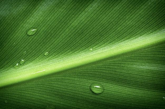 Krople rosy na zielonym liściu