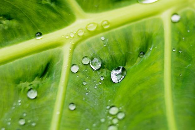 Krople wody lub deszczu spadają na zielone liście
