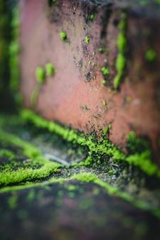 Krople wody na brązowej betonowej ścianie