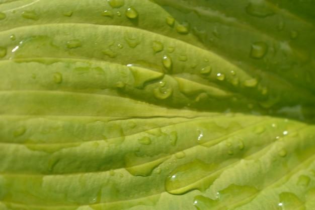 Krople wody na kwiatowych liściach