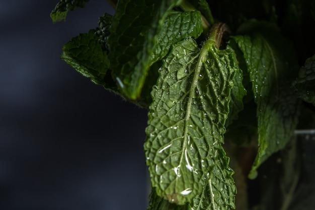 Krople wody na liściach zielonych roślin przez cały rok