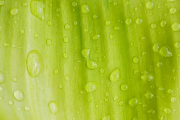 Krople wody na liściach