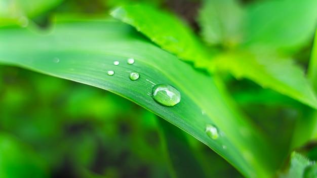 Krople wody na zielony liść