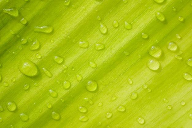 Krople wody na zielonych liściach