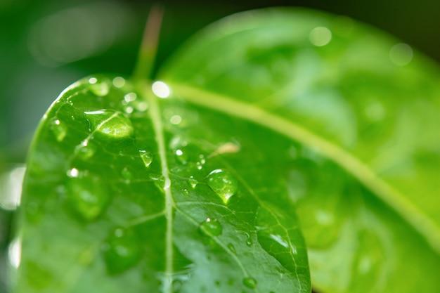 Krople wody na zielonych liściach.