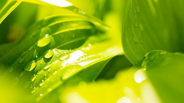 Krople wody na zielonym liściu