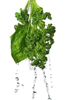 Krople wody na zielonym szpinaku i pietruszce na białym tle