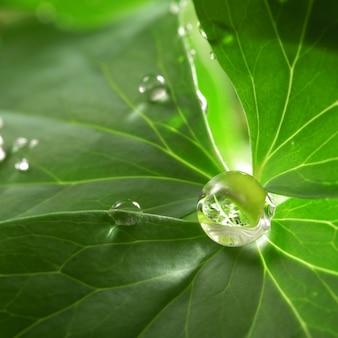 Krople wody rosy na zielonej trawie liści z bliska