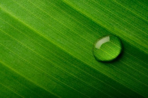 Krople wody spadają na liście bananowca