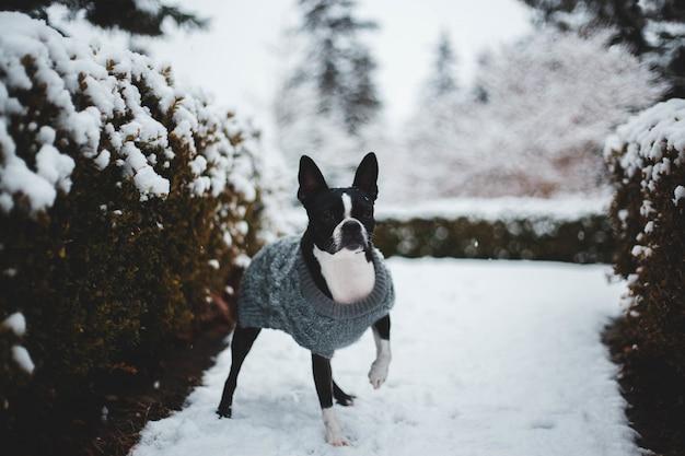 Krótki, czarno-biały pies w pobliżu roślin