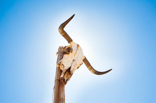 Krowa czaszka na słupku