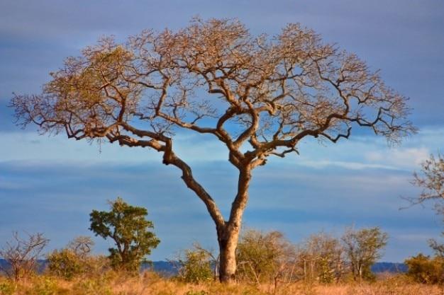 Kruger park krajobraz hdr