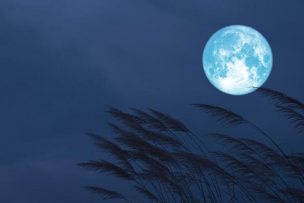 Krwionośny truskawkowy księżyc na nocnym niebie z powrotem sylwetki trawy kwitnie