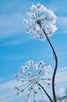 Kryształowe śnieżynki na tle błękitnego nieba. zimowy cud natury kryształy mrozu. zimowy krajobraz sceny