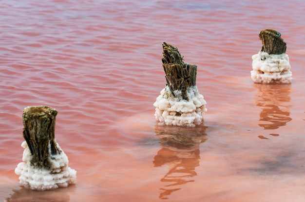 Kryształy soli na grubych kłodach w różowym jeziorze sasyk-sivash w pobliżu miejscowości wypoczynkowej jewpatoria na krymie.