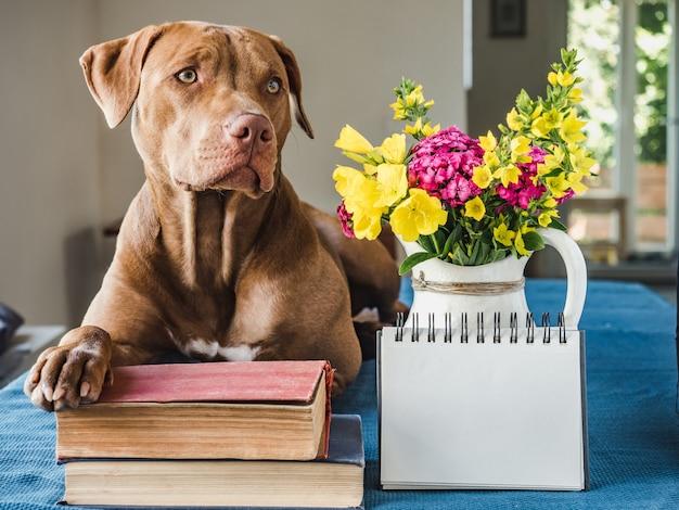 Kryty portret ładny pies