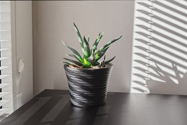 Kryty roślin na czarny garnek