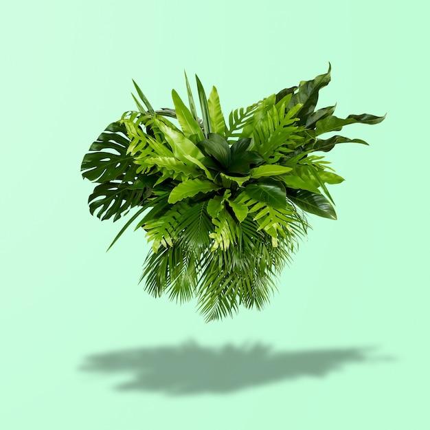 Krzak zielonych liści z jasnozielonym tłem i cieniami słońca