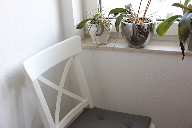 Krzesło w pokoju obok roślin