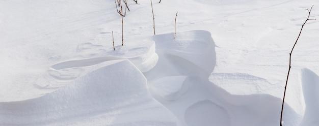 Krzew porzeczki w ogrodzie pod osłoną śniegu, ogród zimowy