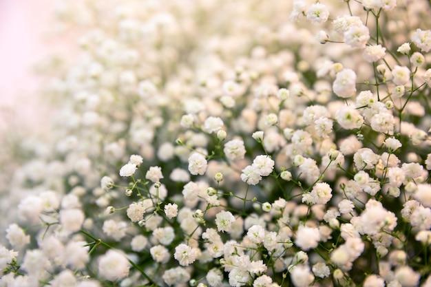 Krzew z białymi kwiatami z bliska