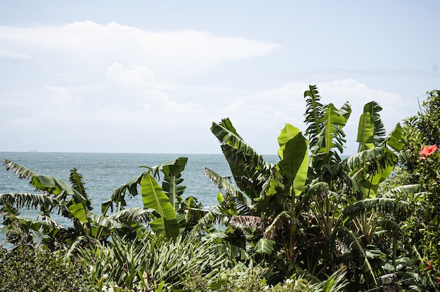 Krzewy i drzewa z morzem w tle w florianopolis w brazylii