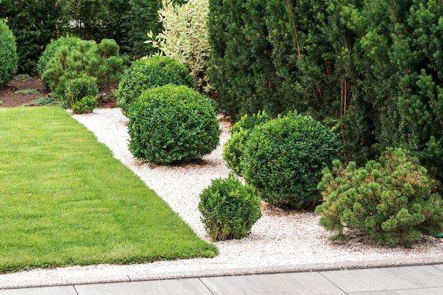 Krzewy i rośliny w projektowaniu krajobrazu
