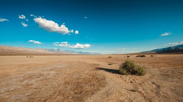 Krzewy na pustyni death valley w kalifornii