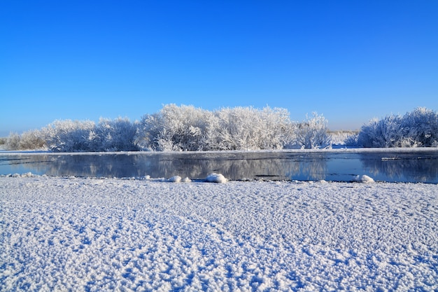 Krzewy śnieżne w pobliżu rzeki zimą