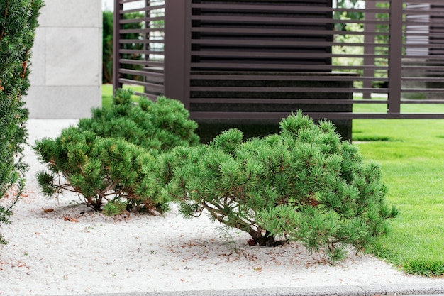 Krzewy w ogrodzie bonsai
