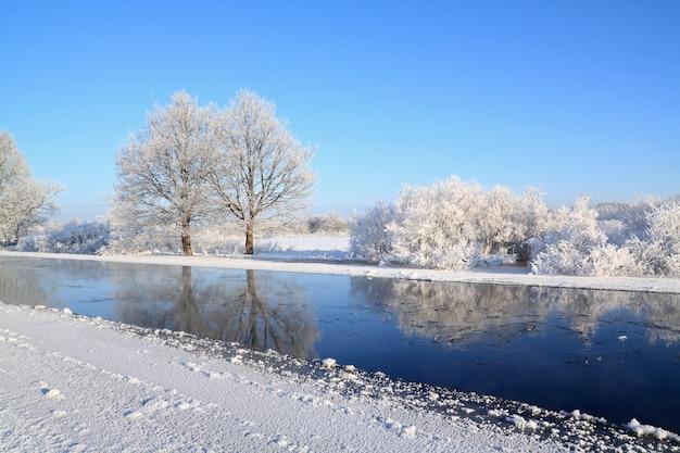 Krzewy w śniegu na wybrzeżu rzeki