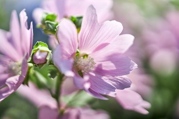 Krzewy z pięknymi różowymi kwiatami w pobliżu domu