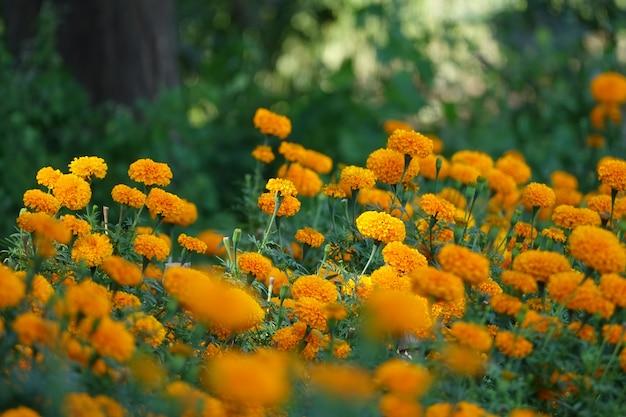 Krzewy z żółtymi kwiatami