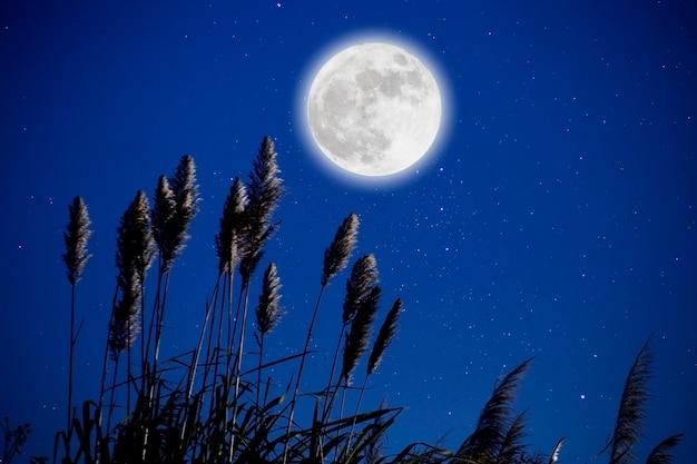 Księżyc w pełni w gwiaździstą noc nad kwiatem trawy.