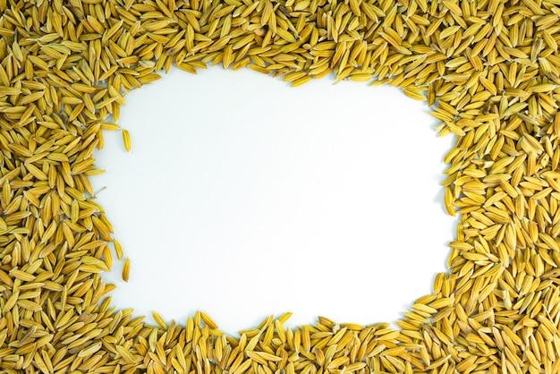 Kształt drzewa ryżu niełuskanego na białym tle