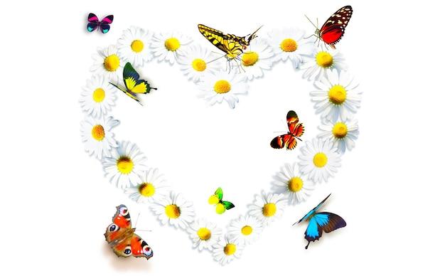 Kształt serca wykonany z białych kwiatów rumianku i motyli