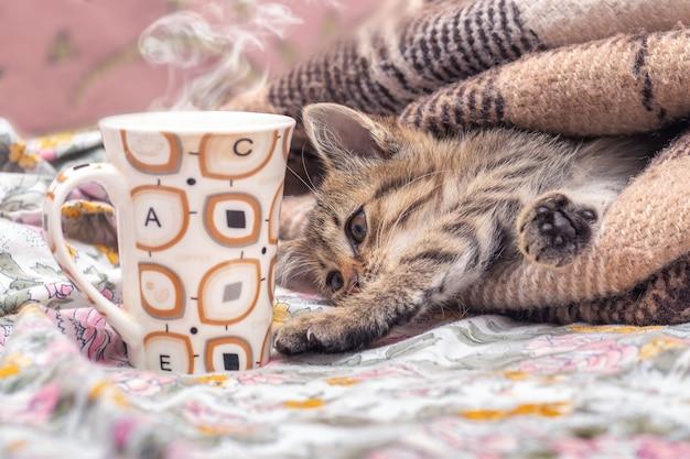 Kubek gorącej kawy w pobliżu małego kotka w łóżku. kotek przeciąga się po śnie. kawa w łóżku
