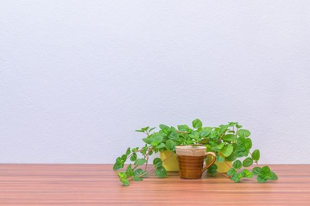 Kubki do kawy i rośliny są na twoim biurku