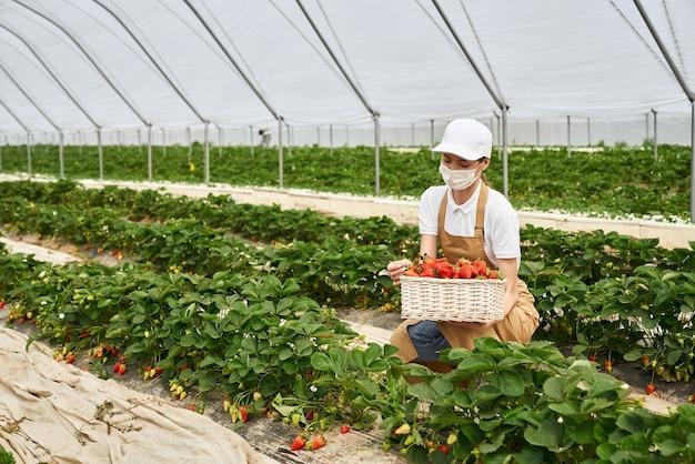 Kucająca kobieta w masce zbierająca truskawki