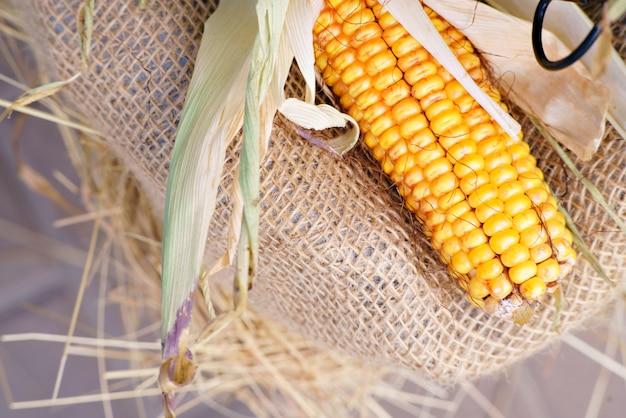 Kukurydza jedna na szczycie miejsca na napis