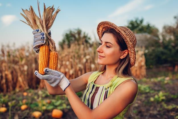 Kukurydza. młoda kobieta rolnik zbieranie zbiorów kukurydzy