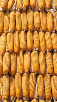 Kukurydzy kukurydzanej sterty zakończenie w górę tła.